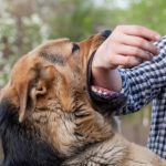What should you do if your dog bites you?